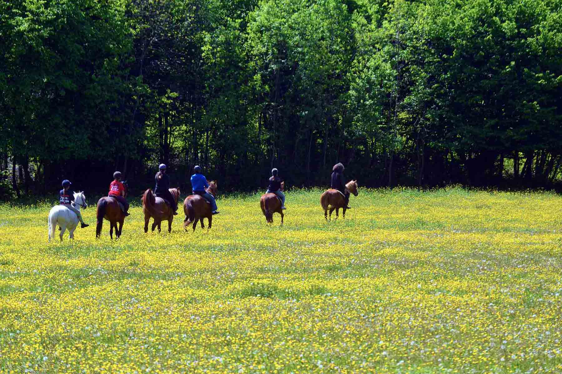 Horses in buttercup field