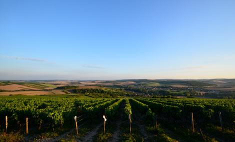 vineyards and view