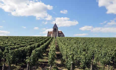 Church in vineyards