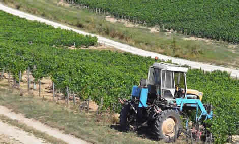 Tractor in vineyards